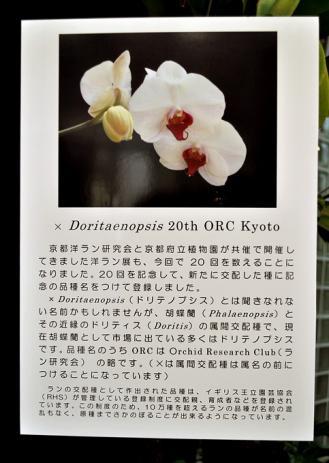 DSC_0137-20120211.jpg