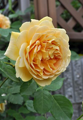 DSC_0525-20120520-2.jpg