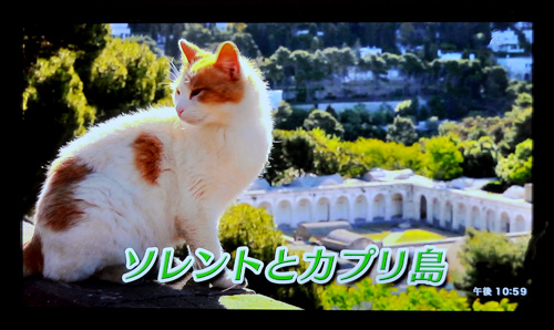 DSC_1129-20120807.jpg