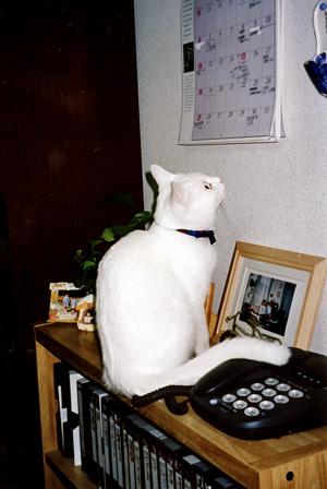 IMG_0015-19980115.jpg