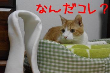 1_20110529183112.jpg