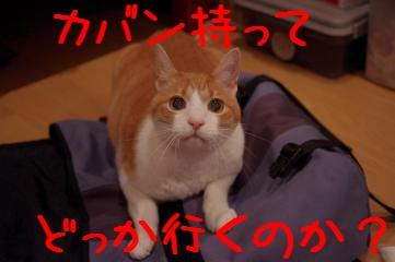 1_20110614205711.jpg