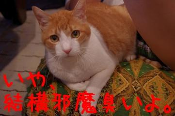 2_20110528202047.jpg