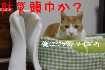 2_20110529183111.jpg