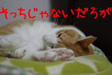 2_20110529231702.jpg