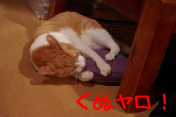 2_20110603222646.jpg