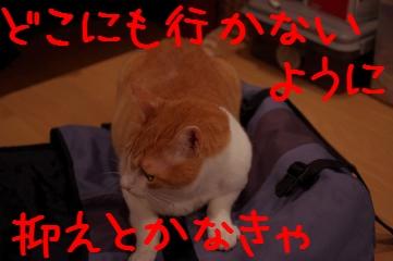 2_20110614205711.jpg