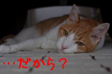 3_20110611082649.jpg
