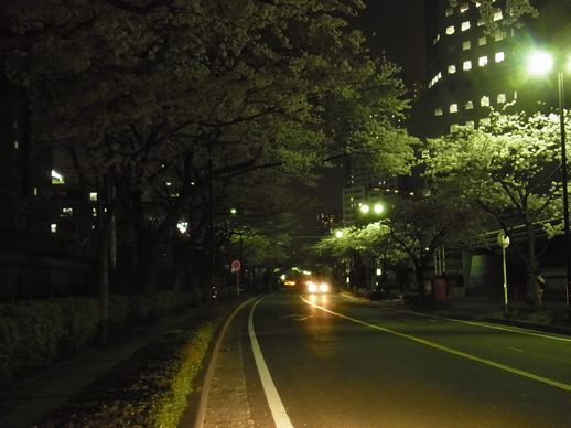 20140402川崎桜 (1)