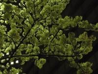 20140402川崎桜 (3)