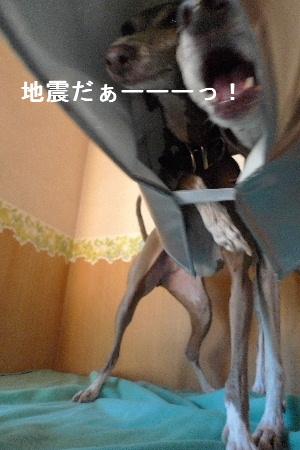 2010_0901花0017