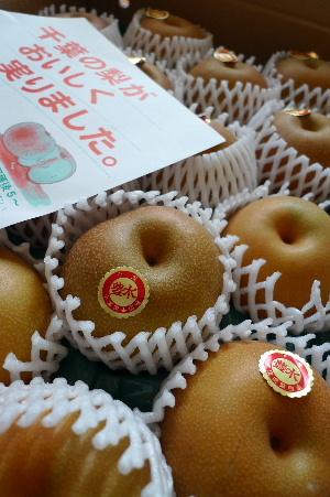 2010_0902花0023