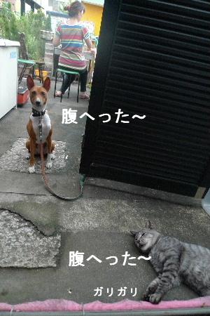 2010_0906花0018