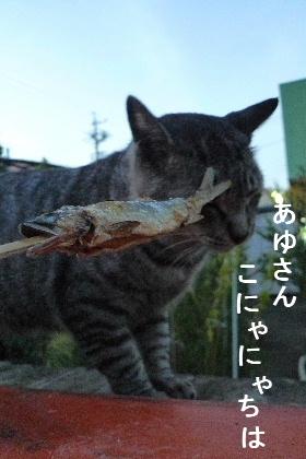 2010_0906花0042