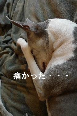 2010_0907花0002