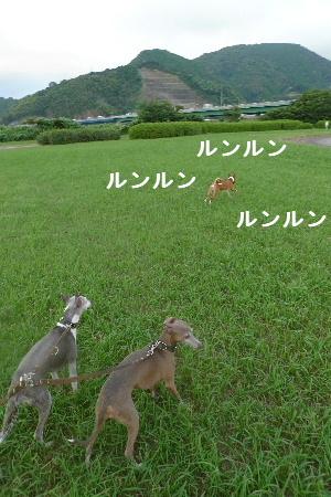 2010_0901花0003