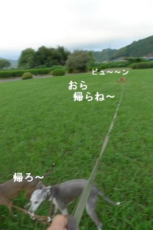 2010_0901花0002