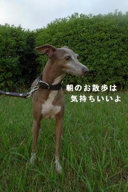 2010_0901花0004