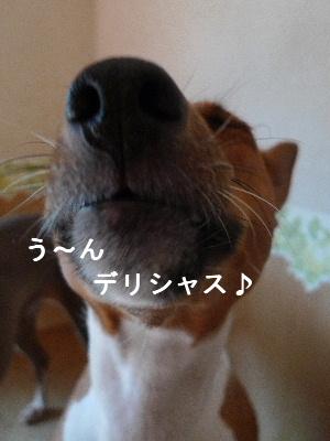 2010_0913花0046