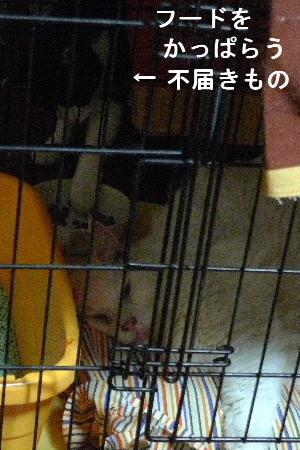 2010_0828花0115