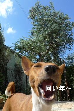 2010_0926花0074