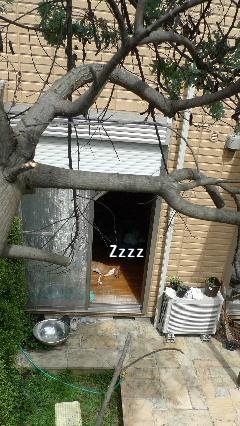 2010_0926花0102