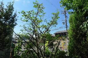 2010_0926花0068