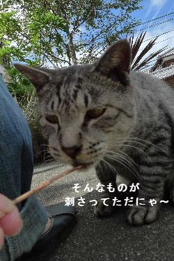 2010_0927花0006