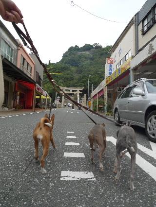2010_1019花0006