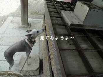 2010_1019花0034
