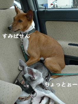 2010_1019花0049
