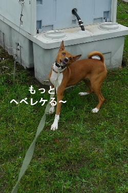 2010_1022花0040