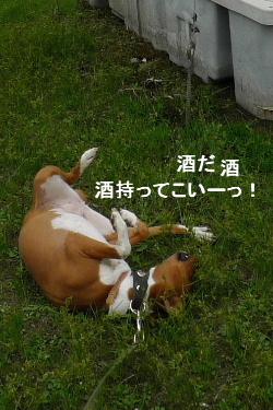 2010_1022花0038