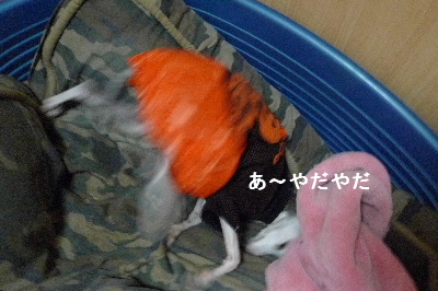 2010_1028花0003