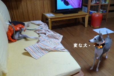 2010_1030花0065