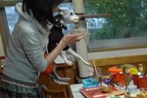 2010_1030花0057