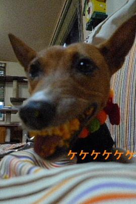 2010_1030花0101