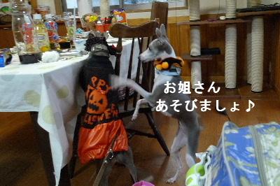 2010_1031花0029