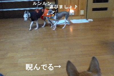 2010_1031花0024