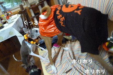 2010_1031花0031