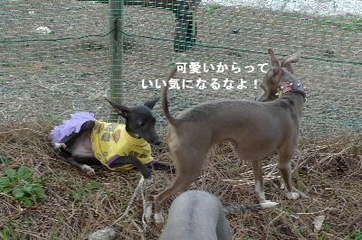2010_1107花0021