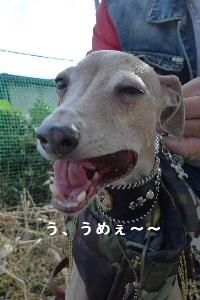2010_1107花0089