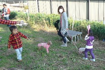2010_1107花0150
