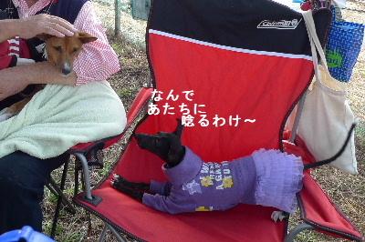 2010_1107花0101