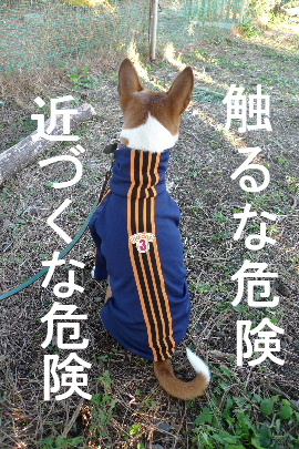 2010_1107花0178