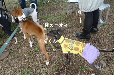 2010_1107花0015