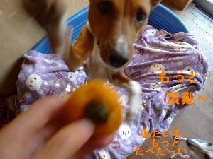 2010_1110花0046