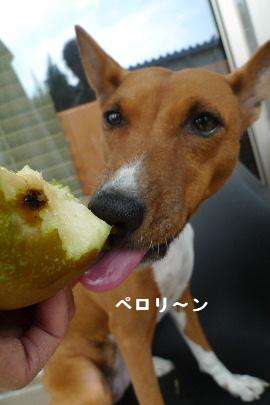 2010_1112花0105
