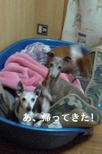 2010_1117花0018