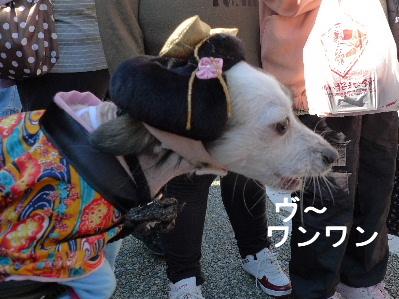 2010_1121花0102